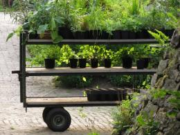 vrtnarija